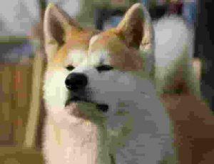 สุนัขญี่ปุ่น