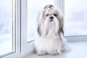 สุนัขสายพันธุ์เล็ก