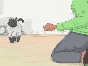 เทคนิคฝึกน้องแมว