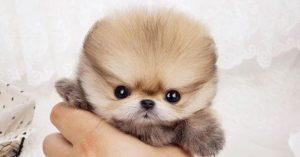 สุนัขพันธุ์เล็ก
