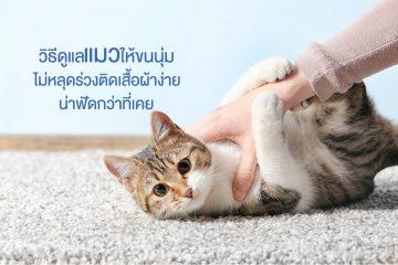 วิธีการเลี้ยงแมว