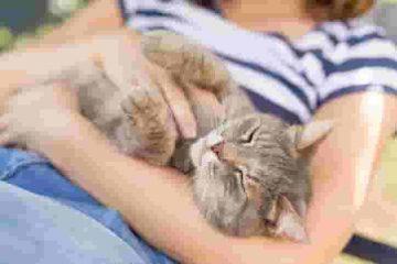 วิธีดูแลแมว