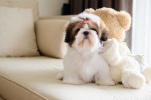 สุนัขพันธุ์เล็กสุดฮิต