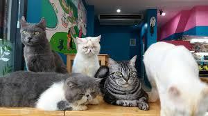 คาเฟ่แมวในกรุงเทพ