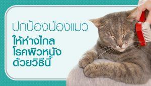 วิธีเลี้ยงแมวให้ไกลโรค