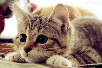 นิสัยของแมว