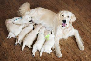 การให้อาหารน้องหมา