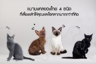 5แมวไทยมงคล