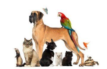 สัตว์เลี้ยงที่นิยม