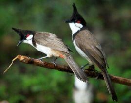 การเลี้ยงนก