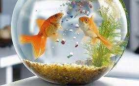 การเลี้ยงปลา