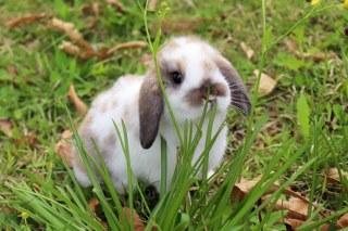 การเลี้ยงกระต่าย