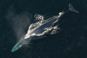 สัตว์ทะเลที่ตัวใหญ่